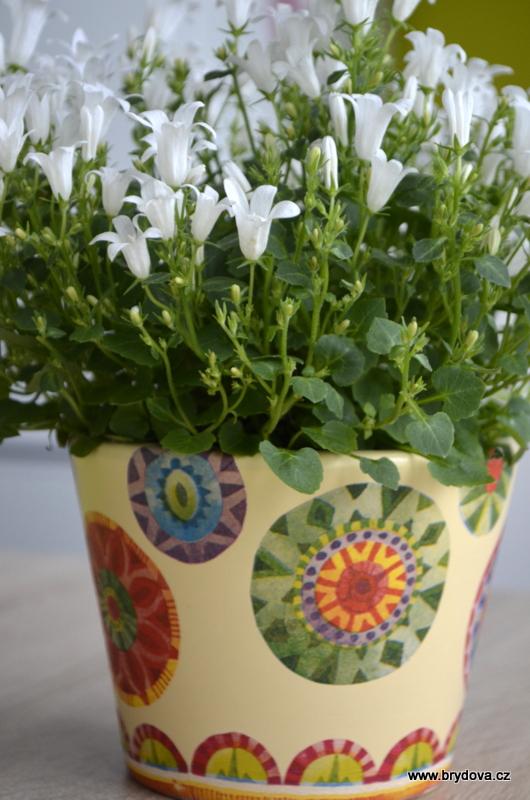 Květináč plný mandal